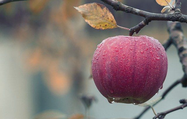 All About Apples  I Easy Apple Crisp