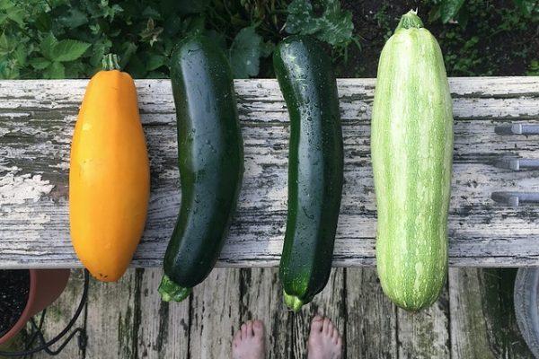 zucchini-2611507_640